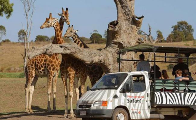 Join a safari through Werribee Open Range Zoo to see giraffes, rhinoceros and more.